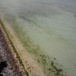 豊崎、瀬長島の散歩の写真・その1